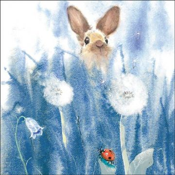 "BLANK CARD BIRTHDAY CARD ""BUNNY RABBIT"" SQUARE SIZE 6.25"" x 6.25"" 8946 EVEH"